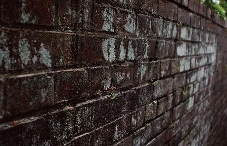 苔むした塀